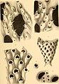 Sitzungsberichte der Kaiserlichen Akademie der Wissenschaften. Mathematisch-Naturwissenschaftliche Classe (1870) (14579612397).jpg