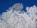 Snow from Winter Storm Skylar (12 March 2018) (near Frenchburg, Menifee County, Kentucky, USA) 14.jpg
