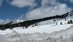 Snowy hillside in Tahoe National Forest.jpg