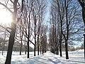 Snowy wood on a sunny day.jpg