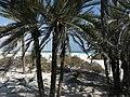 Socotra -Nawjad01.JPG