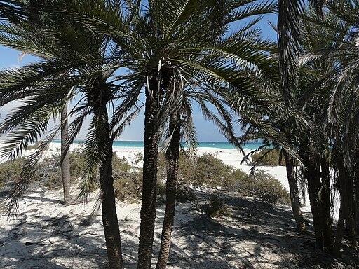 Socotra -Nawjad01