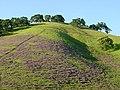 Solano-hillside 000.jpg