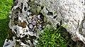 Song Thrush anvil, Chapel Finian, Dumfries & Galloway.jpg