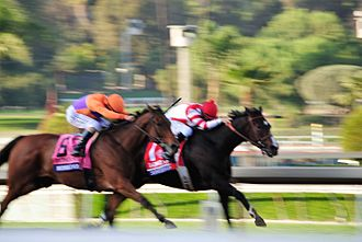 Songbird (horse) - Beholder and Songbird in the stretch run of the Distaff
