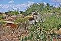 Sonora Desert Museum Tuscon Arizona - panoramio (5).jpg