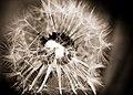 Spiky (3634156684).jpg