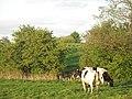 Spring farmland in evening light - geograph.org.uk - 1459916.jpg
