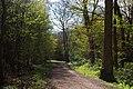 Spring in Hockley Wood - geograph.org.uk - 160527.jpg