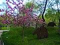 Spring in Lovers' Park, Yerevan (1).jpg