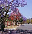 Spring in suburbia, Brisbane (19835765613).jpg