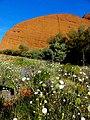 Springtime at Kata Tjuta - panoramio.jpg