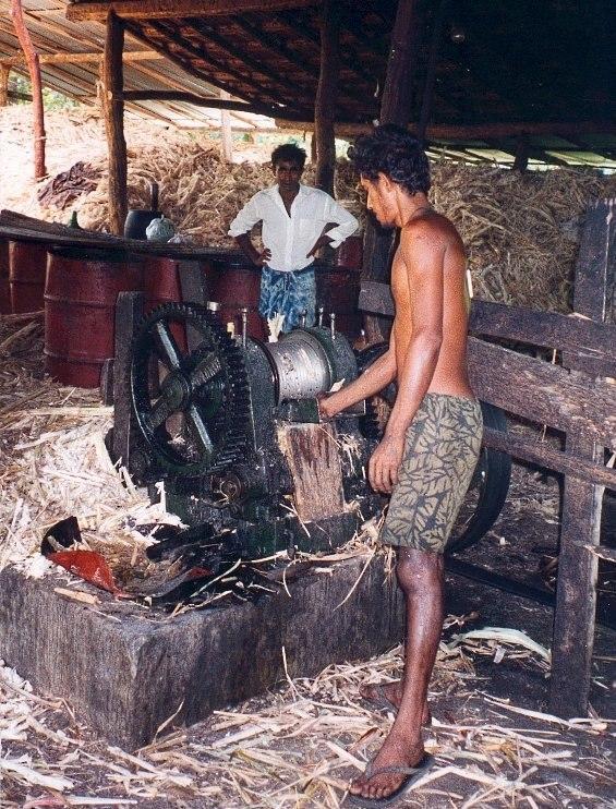 Sri Lankan coconut fibre
