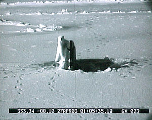 USS Connecticut (SSN-22) - Connecticut breaks polar ice and is encountered by a polar bear.