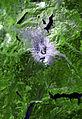 St helens satellite map.jpg