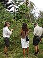 Starr-080613-8779-Solanum torvum-with John Greg and Dana-Community garden Sand Island-Midway Atoll (24921199345).jpg