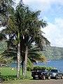 Starr-090506-7447-Roystonea regia-habit and trucks-YMCA Keanae-Maui (24927661046).jpg