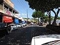 Starr-110412-5152-Cordia subcordata-habit-Front St Lahaina-Maui (24787208840).jpg