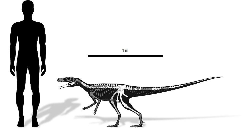Staurikosaurus size