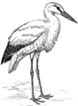 Stork (PSF).png