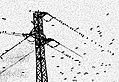 Storni 5 Starlings in Tuscany.jpg