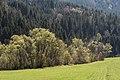Strassburg Gurk-Fluss Baeume an den Ufern 11042016 3042.jpg