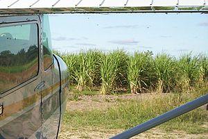 Alto Paraguay Department - Sugar cane, Linea 14, Agua Dulce Region