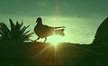 Sunset with Pigeon.jpg