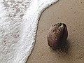 Surf vs Coconut (8727097111).jpg