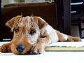 Sweet Puppy Butters.jpg