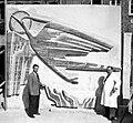 TATTENPACH Odo Aufsteigender Phoenix 1953 vor Auslieferung (Zerries BS).jpg