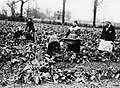 THE WOMEN'S WORK IN AGRICULTURE, 1914-1918 Q108484.jpg