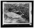 TUNNEL ROCK BEFORE ROAD RECONSTRUCTED BENEATH IT, NO DATE - Generals Highway, Three Rivers, Tulare County, CA HAER CAL,54-THRIV.V,2-19.tif