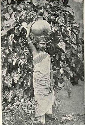 Indian Tamils of Sri Lanka - Indian Tamil worker at a tea plantation in Ceylon, The National Geographic Magazine, April 1907