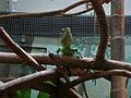 Taronga Zoo (6182470858).jpg