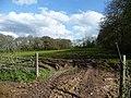 Taunton Deane , Muddy Field Entrance - geograph.org.uk - 1243576.jpg