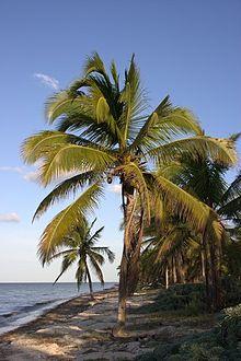 Kleine Hotels Playa De Palma