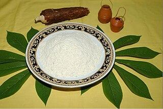 Tapioca starch extracted from cassava root (Manihot esculenta)