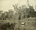 The American angler (1895) (14591742279).jpg