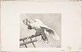 The Angry Parrot MET DP808422.jpg