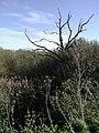 The Bog, Roos - geograph.org.uk - 269544.jpg