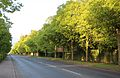The Bury Road in Newmarket, UK.jpg