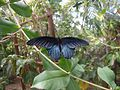 The Butterfly Farm, Grand Cayman - panoramio.jpg