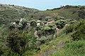 The Dragon trees of La Tosca.JPG