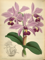The Orchid Album-01-0101-0033.png
