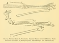 The Osteology of the Reptiles-194 kijh iuh.png