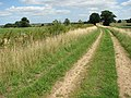 The Wherryman's Way - to the River Chet - geograph.org.uk - 1425458.jpg
