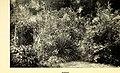 The book of the wild garden (1903) (20211895440).jpg