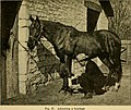 The care of animals - a book of brief and popular advice on the diseases and ailments of farm animals (1905) (14595869509).jpg