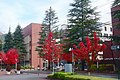 The colored leaves of the October avenue autumn.JPG